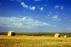 Guld- Hayfields i sydvästliga South Dakota, buffelGap grässlättar arkivfoton