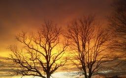 Guld- himmel på solnedgången Arkivfoto