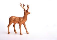 Guld- hjortar Arkivfoton
