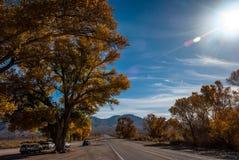 Guld- huvudväg Arkivbild