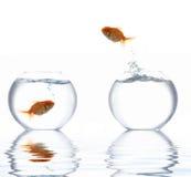 guld- I banhoppning för fisk Royaltyfri Bild