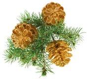 Guld- julkottar med granfilialen Royaltyfri Fotografi