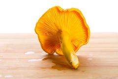 Guld- kantarellsvampar stänger sig upp Arkivfoton