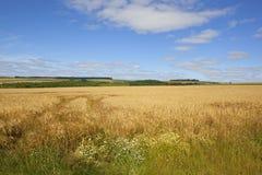 Guld- korn och vildblommor Fotografering för Bildbyråer