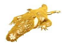 Guld- krokodil Arkivfoton