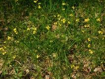 Guld- kronblad av delikata ängblommor arkivbilder