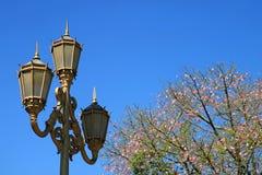 Guld- kulör flott lampstolpe med det siden- Flossträdet för blomning mot livlig blå himmel royaltyfri foto
