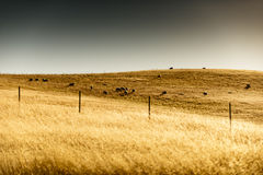 Guld- kulle Arkivbild
