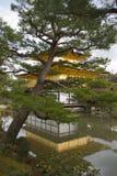 guld- kyoto tempel arkivbild