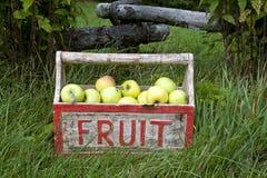 Guld- - läckra äpplen Royaltyfri Foto