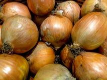 Guld- lök - ny frukt Vegetabels efter skörd royaltyfria foton
