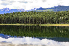 guld- lake Royaltyfria Bilder