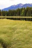 guld- lake Royaltyfri Foto