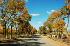 guld- landskap för fall Royaltyfria Bilder