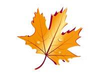 Guld- leaf Arkivbild