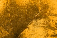 guld- leaftextur arkivfoton
