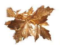 guld- leaves arkivbild