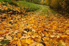 guld- leaves Royaltyfria Foton