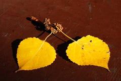 guld- leaves för asp- höst Royaltyfri Bild