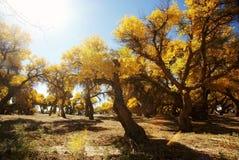 guld- leaves för höstskog Fotografering för Bildbyråer