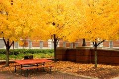 guld- leaves har picknick tabellen Arkivbilder