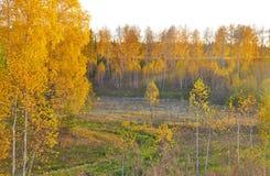 guld- leaves russia för höstbakgrund Royaltyfria Bilder