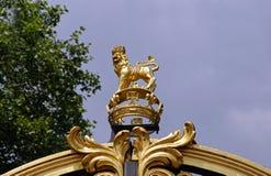 Guld- lejon Royaltyfri Fotografi