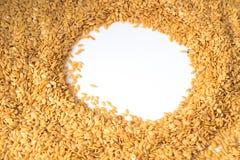 Guld- lin kärnar ur eller linfrö Arkivbild