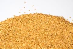 Guld- lin kärnar ur eller linfrö Royaltyfri Foto
