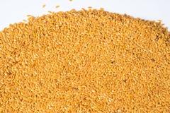 Guld- lin kärnar ur eller linfrö Arkivbilder