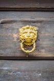 Guld- Lion Door Knocker på en trädörr Royaltyfria Bilder
