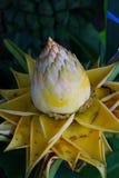 Guld- lotusblomma Royaltyfri Foto