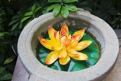 guld- lotusblomma för blomma Arkivfoto
