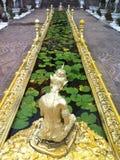 Guld- lotusblommadamm Arkivfoton