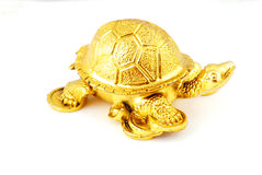 guld- maskot Royaltyfri Foto