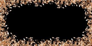 Guld- mistel Fotografering för Bildbyråer