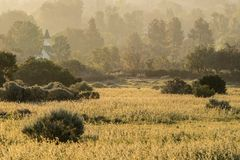 Guld- Misty Meadow Morning Royaltyfri Foto