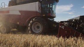 Guld- moget rågfält med den arbetande lantgårdskördetröskan stock video