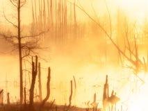 guld- morgon arkivfoton