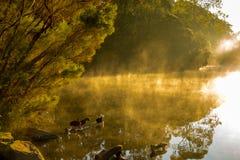 guld- morgon Fotografering för Bildbyråer