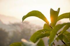 guld- morgon Arkivbild