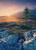 guld- morgon Tappning Royaltyfria Bilder