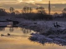 Guld- morgon vid floden Royaltyfria Bilder