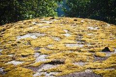 Guld- mossa på Pha Hin Goob Royaltyfria Bilder