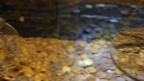Guld- mynt och guld- stång arkivfilmer