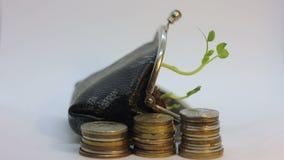 Guld- mynt och handväska med den unga växten som växer och dör Begrepp för förhöjning för pengartillväxt och fallande marknad Aff stock video