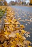Guld- nedgång: Lövfällningtid Arkivbilder