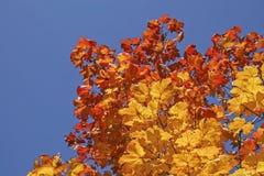 guld- oktober Royaltyfria Foton
