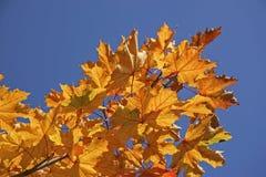 guld- oktober Arkivfoton