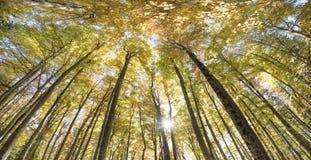Guld- Oktober med härliga kulöra bokträdträd royaltyfria bilder